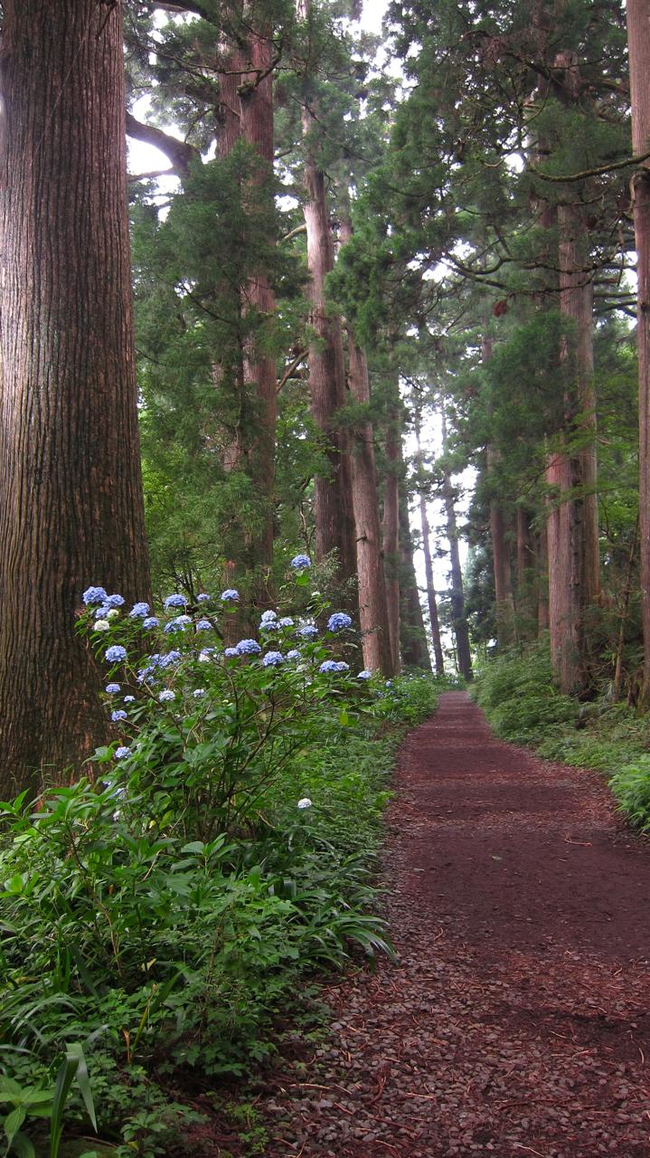 ANcient Cedar Walk Japan Hakone
